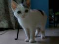 寵物認養,為小三花找尋他的家---小三花(已找到家,謝謝大家)