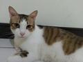寵物遺失,請協助找尋我的寶貝---米克斯