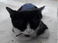 寵物遺失,請協助找尋我的寶貝---賓士貓